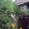 debris in Neighbors driveway