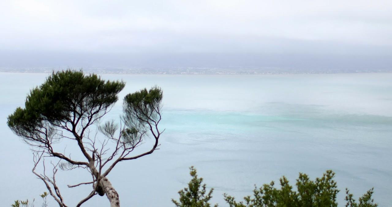 Kapiti Island 074.JPG