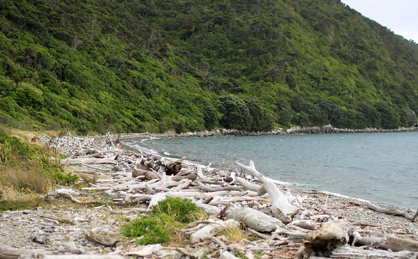 Kapiti Island 135.JPG