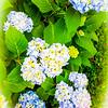 Unreal Flower Bunch