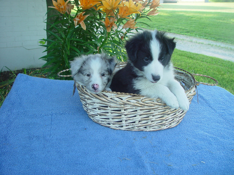 Summer and Flo - 6 1/2 weeks