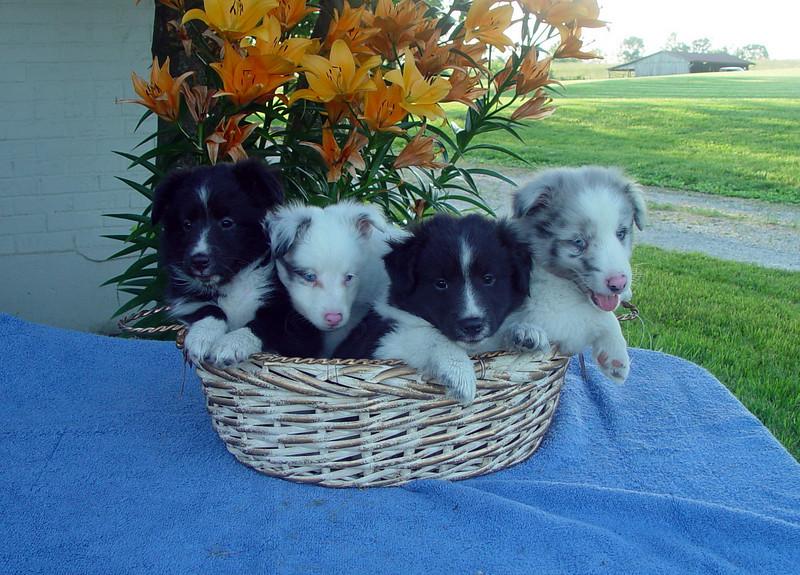 Maeve, Marty, Finn, Gale - 6 1/2 weeks