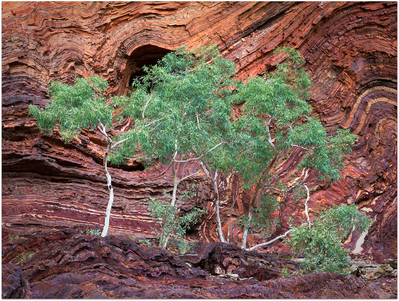 Trees against the rockface