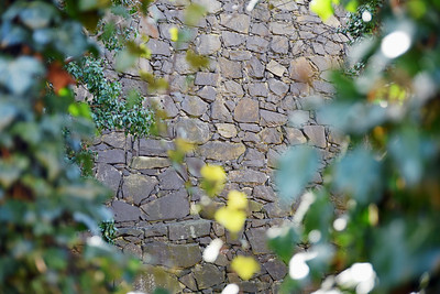 Mur o Murgröna - Gömda Parken