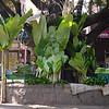 Bangalore-11-1040883.jpg