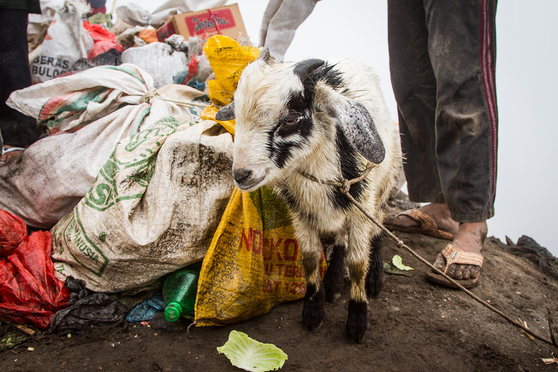 Vegetables, money, chickens and even goats are offered, but fortunately today live animals are symbolic and are safely passed from above to a catcher waiting in the crater below.