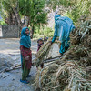 Getting the crops ready for husking in Goma Kargil, a village near Kargil in India