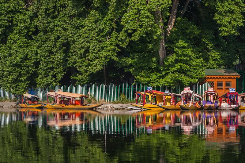 Shikaras at Dal lake in Srinagar, Kashmir, India