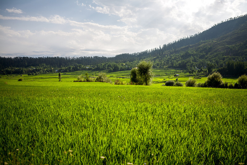 Rolling fields of Lolab valley, Kashmir, India