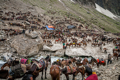 Scenes of hundreds of horses and horsemen waiting on the brown snow for their passengers signal that the holy Amarnath cave is close by.