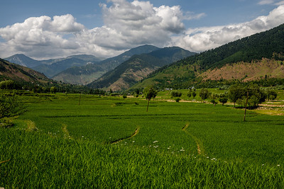 Verdant fields of rice stretch all the way to the horizon surrounded by mountains on all sides in Lolab valley, Kupwara district in northern Kashmir.
