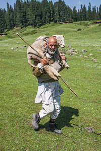 Portrait of a man carrying his sick sheep over his shoulders to a medical camp through the green meadows around Dragdolan all the way to Yusmarg in Kashmir.