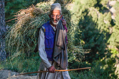 An old man carries a heap of hay on his back and walks through the forest of Neelnag near Yusmarg in Kashmir.