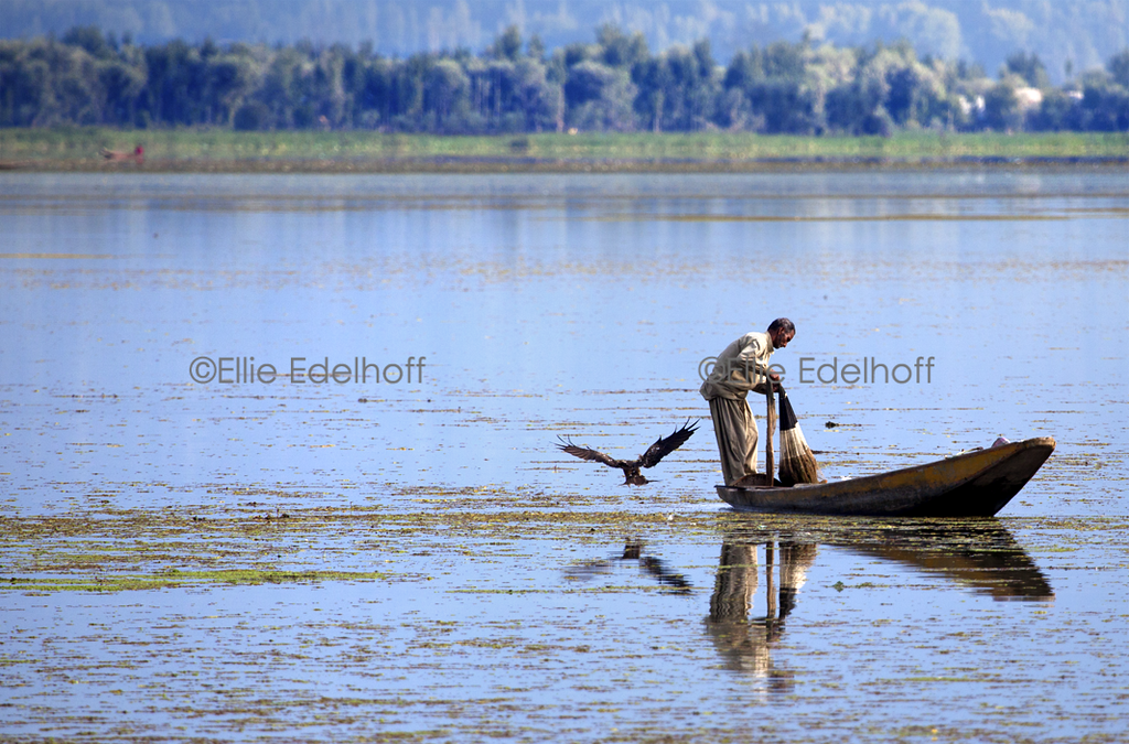 Afternoon Fishing on Dal Lake - Kashmir, India