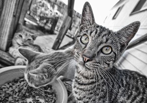 Kat Farm Kittens