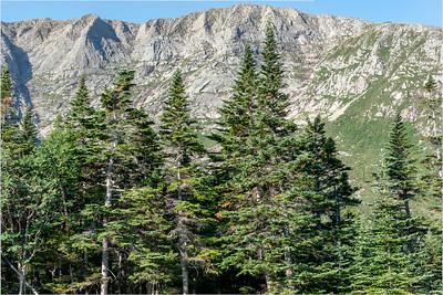 Chimney Pines