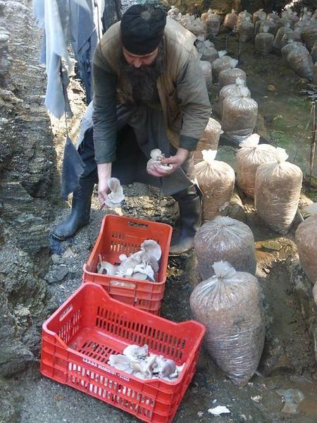 Μονάδα παραγωγής μανιταριών στην κατάληψη