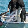 Αλιευτικά σκάφη - κατάληψη Μονής Εσφιγμένου
