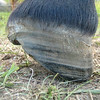 Lateral after trim showing heel