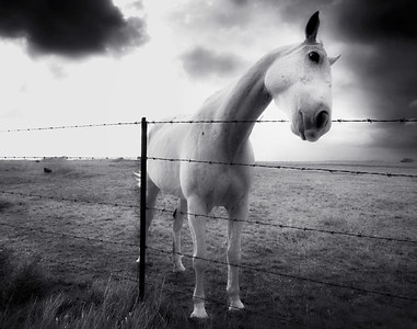 Island Horse 7