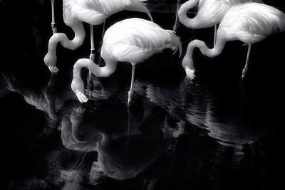 Flamingos 4