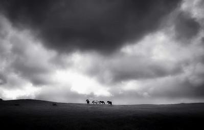 Horse Storm