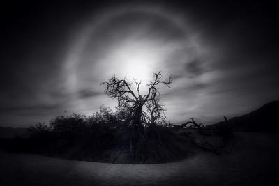 Desert Sun Dog