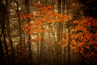 Smokey Autumn