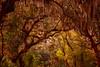 Cumberland Moss