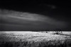 Barley Cloud