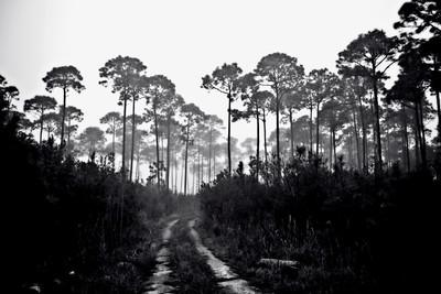 Everglades Road