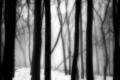 Bluff Fog 8