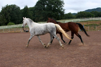 "Picasso says, ""Hey Billy we should go for a run!"" (Check out the butt on the QH!)"