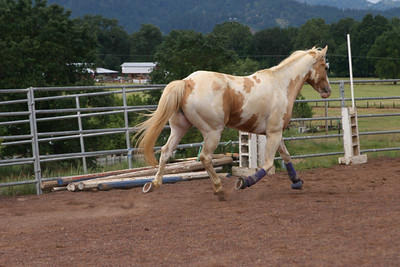 Enter Cochise, aka Cheese or Cheese-man, the palomino-paint gelding.