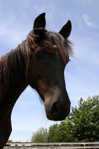 Here is Selene, almost 1 year. Big dark eyes, small elegant head.