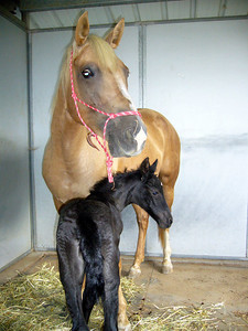 Day 1: Proud momma and filly.