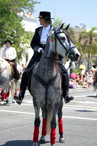A grey andalusian at the Santa Barbara Spanish Parade, August 2004