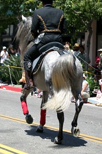 Grey Andalusian stallion at the Santa Barbara Spanish Parade, August 2004