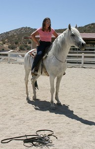 Andalusian Stallion Cordero, owned by Carolyn Ramos, Acton CA