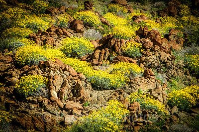 Brittlebush Garlands - Item # BG-1
