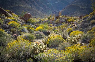 Desert Wild Flower Garden - Item # DWFG - 1