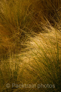 Desert Grasses Abstract - DGA - 1