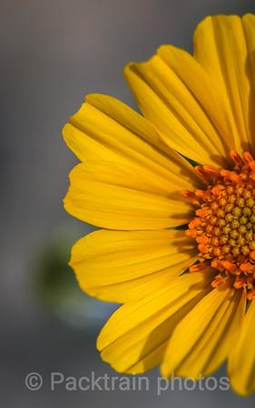 Sunflower Greeting - SG4
