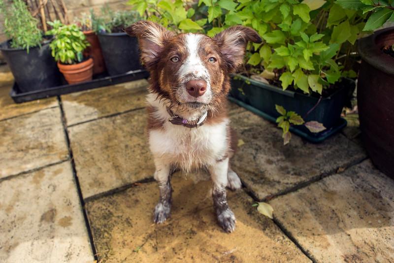 Muddy Katie 2