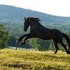 FLY! (Kylian, Adirondack Mountains, NY)
