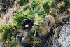 Bald_Eagle_August_2020_Katmai_Alaska_0038