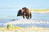 Boar_River_Confrontation_August_2020_Katmai_Alaska_0019