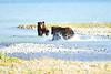 Boar_River_Confrontation_August_2020_Katmai_Alaska_0002