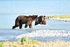Boar_River_Confrontation_August_2020_Katmai_Alaska_0015