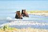 Boar_River_Confrontation_August_2020_Katmai_Alaska_0004